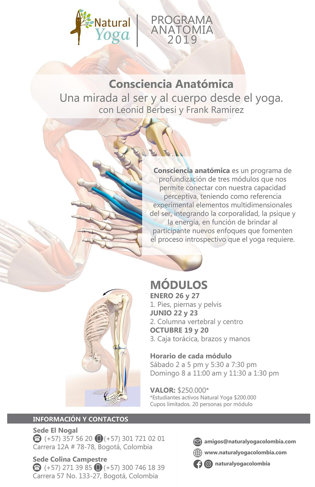 Afiche anatomia